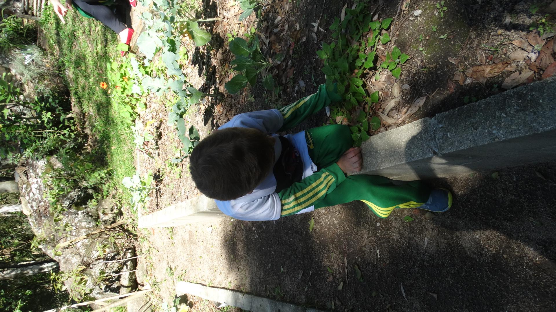 Infantil 5